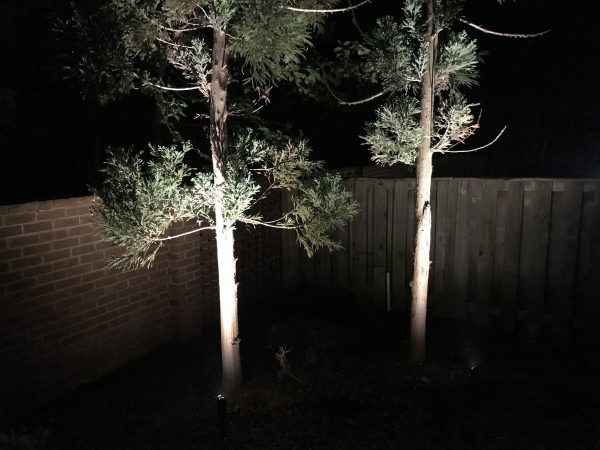 Uplights for 2 tall trees in McCauliffe backyard in Silver Springs, MD