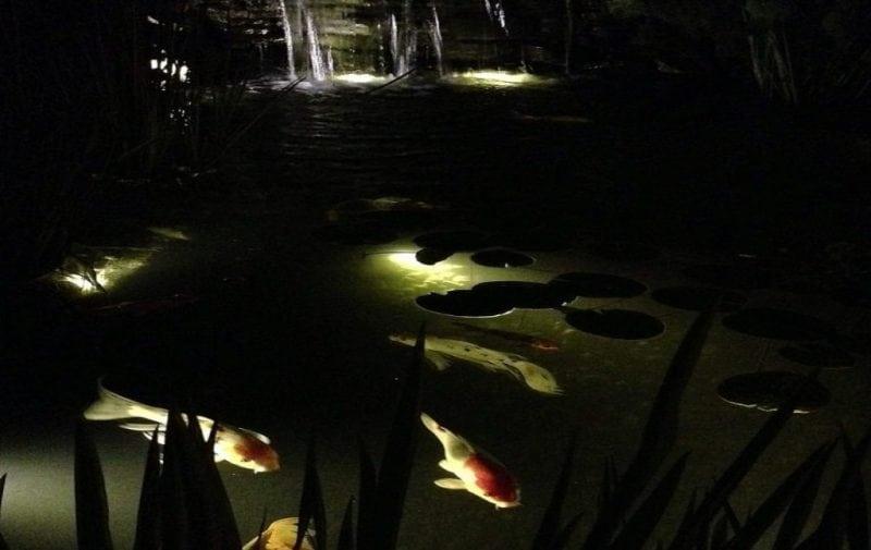 Underwater lighting for ponds with koi fish and waterfall