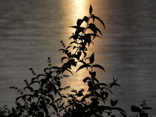 Silhouetting as a landscape lighting design