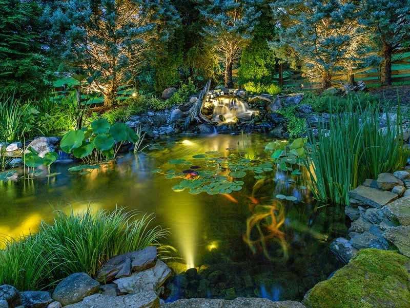 Perfect number of underwater pond lights for fish